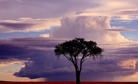 AfricaMaasaiMaaraEvening